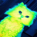 Research on AIDS Leaves Cats Glowing Green