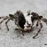 Scientists Create 'the Spider-Goat' to Farm Silk