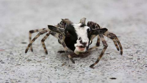 Scientists Create 'the Spider-Goat' to Farm Silk • The Fox ...